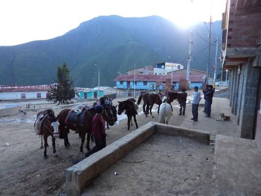 marcahuasi san pedro caballos