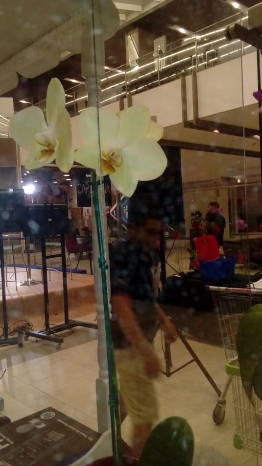 orquideas foto 12