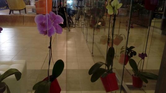 orquideas foto 20