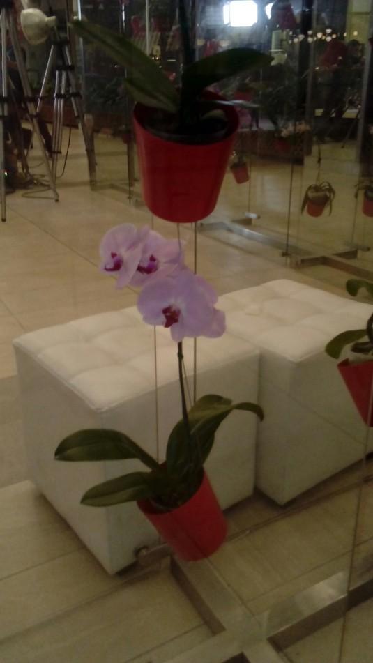 orquideas foto 21