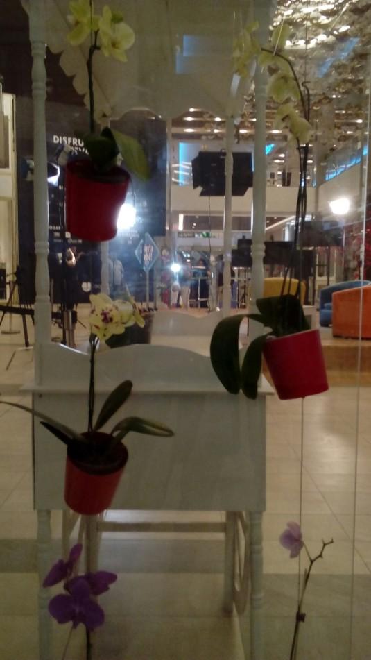 orquideas foto 24