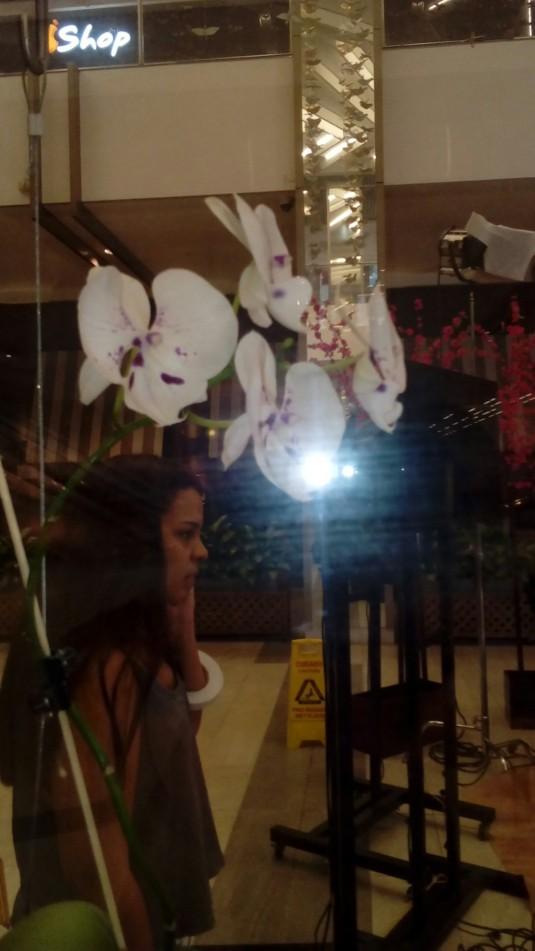 orquideas foto 5