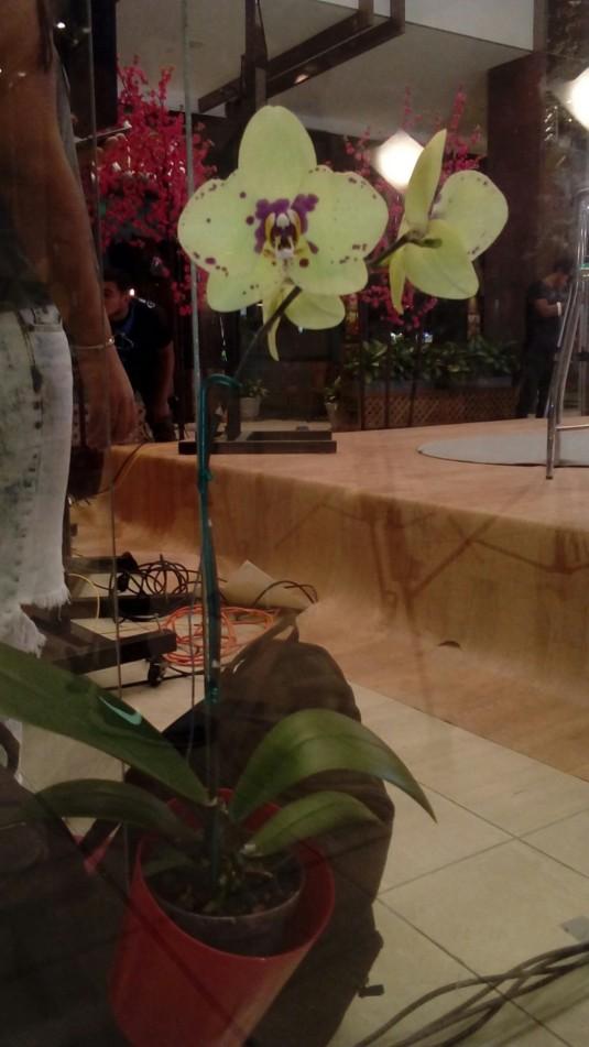 orquideas foto 6
