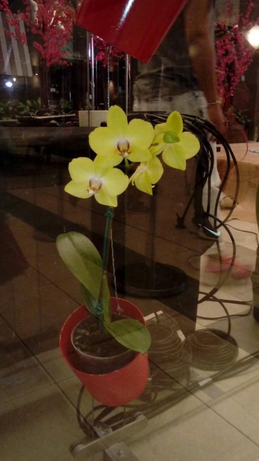 orquideas foto 7