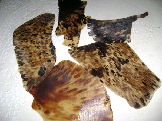 pedazos de concha carey